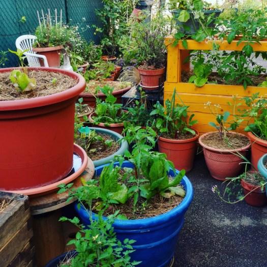 potager-minimaliste-permaculture-lasagne-bac-pot-fleurs