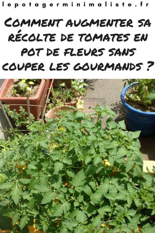 recolte-tomate-balcon-terrasse-pot-fleurs-lasagne-pinterest