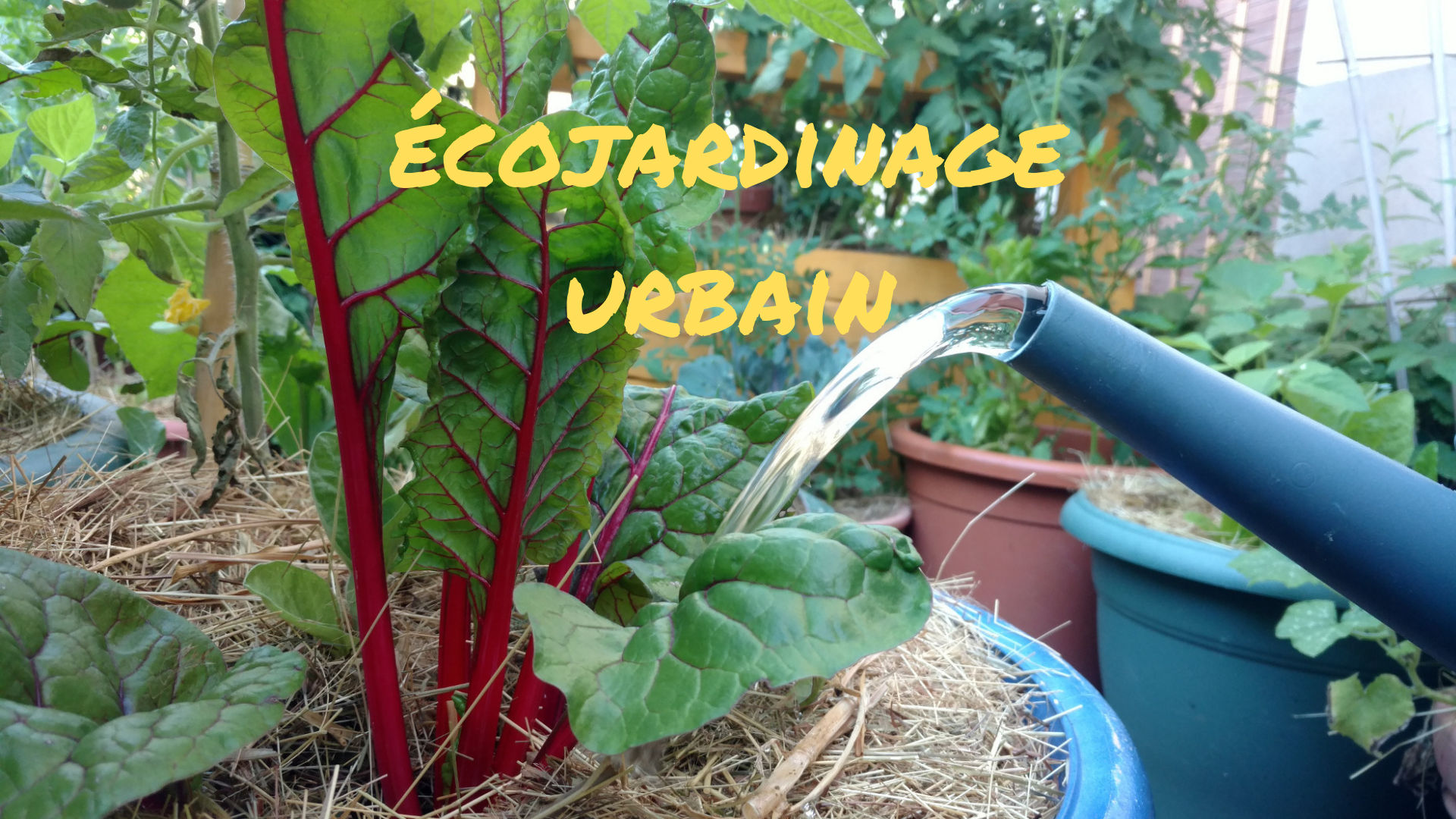 ecojardinage-urbain-permaculture-potager-terrasse