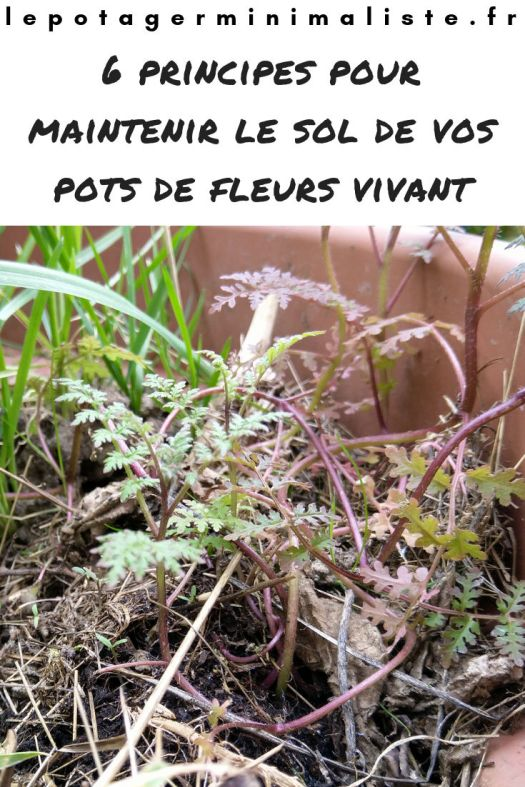 6-principes-maintenir-sol-vivant-pot-fleurs-pinterest