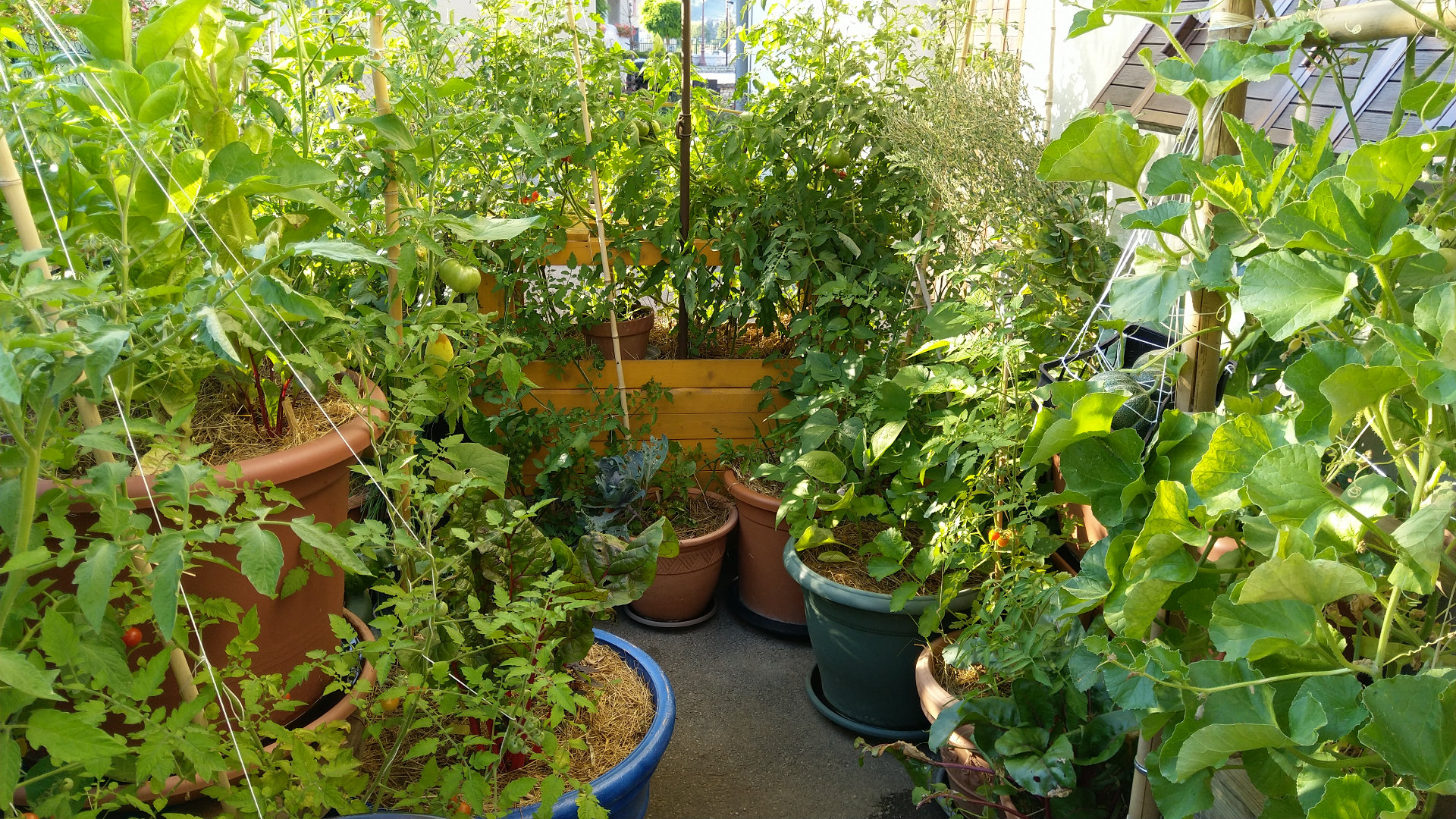 jardin-foret-balcon-terrasse-permaculture