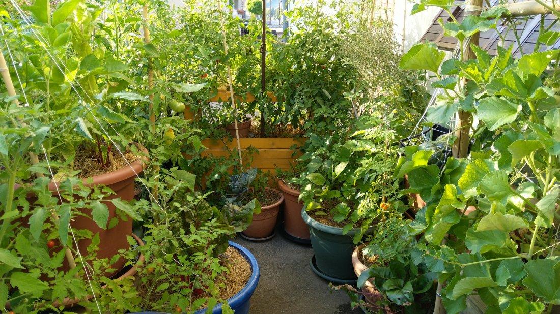 jardin-foret-balcon-terrasse-permaculture