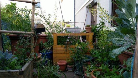 potager-permaculture-urbaine-printemps-micro-climat