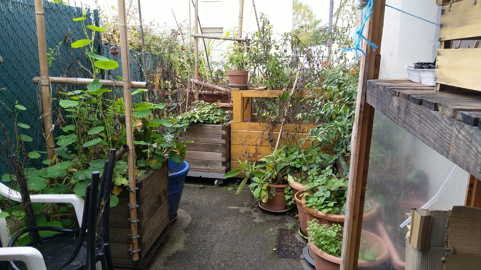 reorganiser-balcon-potager-hiver-permaculture