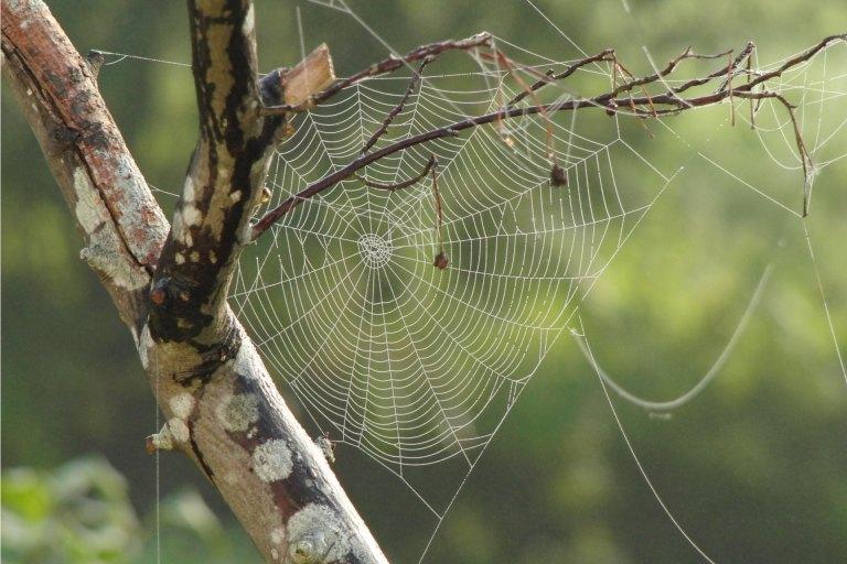 toile-araignée-permaculture-principe-7