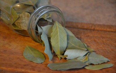 Réaliser un macérat de laurier sauce pour soulager ses articulations