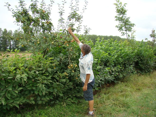 Créer son verger bio, en permaculture.