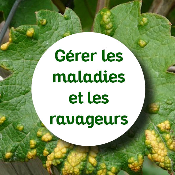 créer jardin permaculture