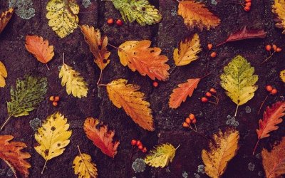 Les feuilles mortes en paillage
