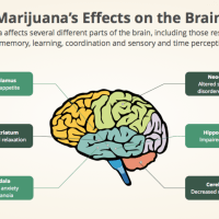 The Different Physical And Mental Effects Of Marijuana