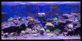 coral rock long tunze 0104.820 (4)