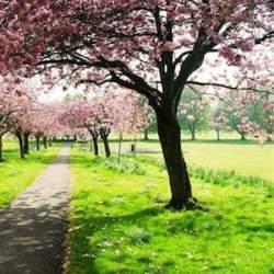 vue de printemps