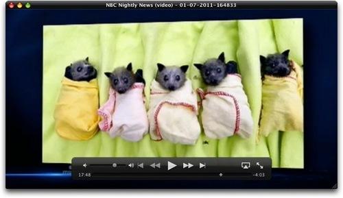 Babybats