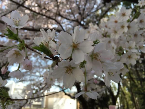 Photo Mar 31, 2 14 37 PM