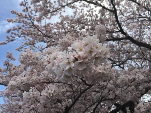 Photo Apr 04, 12 34 43 PM