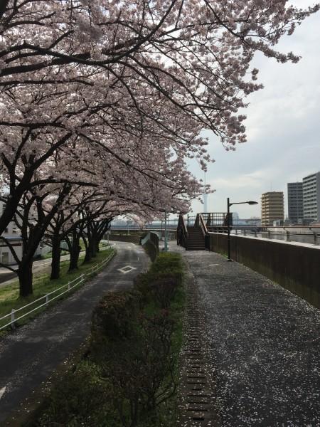 Photo Apr 04, 12 43 17 PM