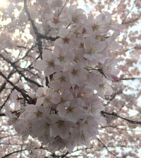 Photo Apr 04, 12 43 28 PM