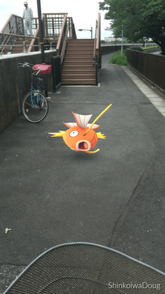 There a dozens of these stupid MagiKarp all along the riverside.