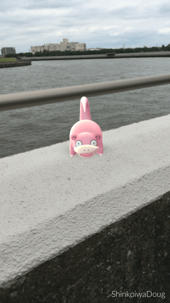 A slowpoke was hanging out on the wall along where I was riding.
