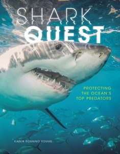 shark quest cover