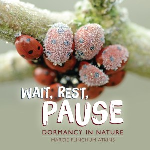 Wait, Rest, Pause cover
