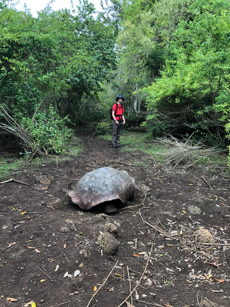 Hiking the tortoise migration route.