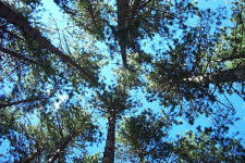 The view from my hammock in Algonquin. Ah, the peace and quiet. August 2002