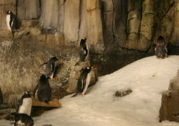 I think the Penguins are on strike - most of them had their backs  turned to us most of the time we were there.  On strike or they  were being punished.