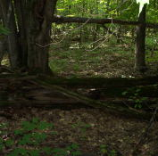 A rather old log fence that runs a distance along the trail.