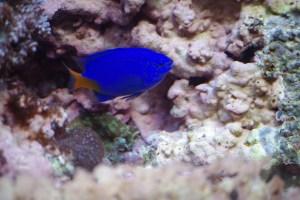 bel aquarium recifal 7347