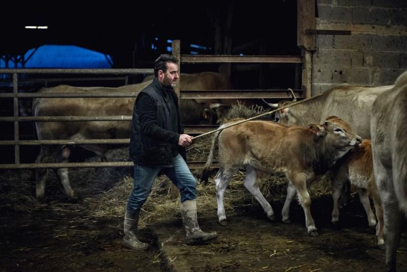 Ferme de Laurent Chalet - Vache nantaise - Photo Paul Stefanaggi