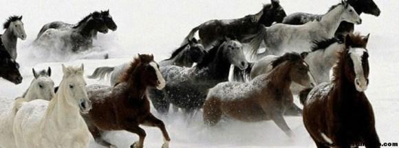 Chevaux sous la neige-Photo de couverture journal Facebook
