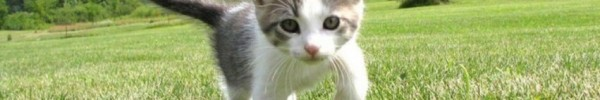 chaton marche dans la prairie- Photo de couverture journal Facebook