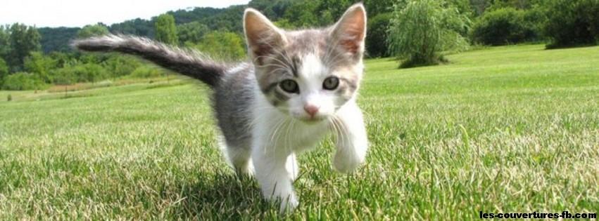 chaton marche dans la prairie- Photo de couverture journal ...
