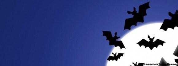 Chauves souris la nuit 2012 - Photo de couverture journal Facebook