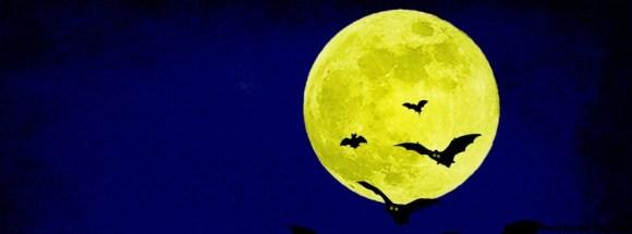 chauves souris en pleine lune - Photo de couverture journal Facebook