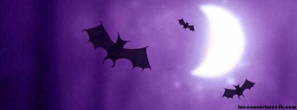chauve souris violettes - Photo de couverture journal Facebook