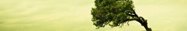 camaieux de vert - Photo de couverture journal Facebook