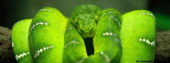 serpent-photo de couverture journal facebook