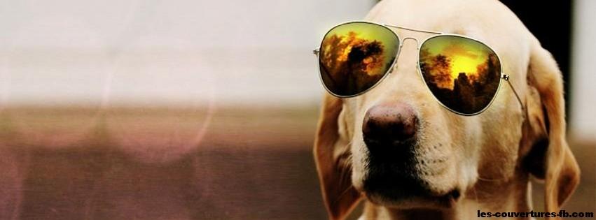 chien à lunettes -Photo de couverture journal Facebook