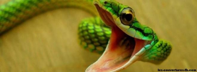 serpent-photo de couverture-journal facebook