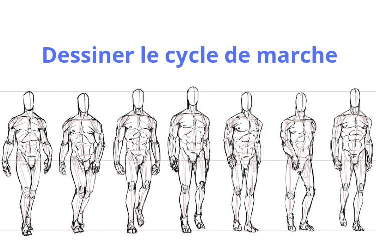 Comment dessiner le cycle de marche _