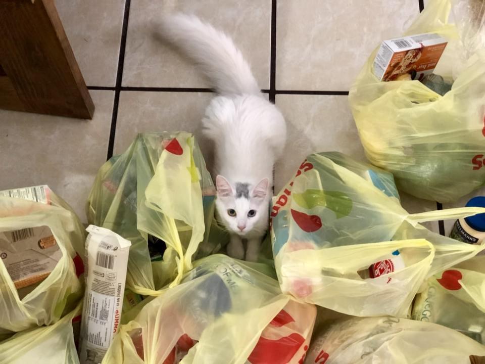 Quelles solutions pour réduire les emballages plastiques dans les courses ?