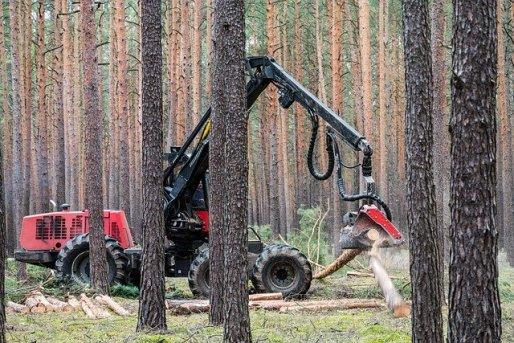 Exploitation forestière, gestion durable des ressources