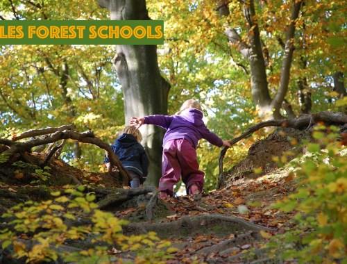qu'est-ce qu'une forest school ?