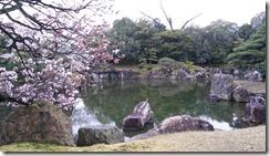 cerisiers-kyoto-filles-du-thé