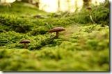 champignon-mousse-sous-bois-les-filles-du-the-pu-er