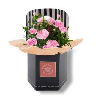 ヌメロサンク・パリ,ピンク色のカーネーションの鉢植え,Numero 5 Paris,母の日,2020,