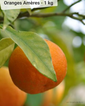 Orange Amère - VERGERS DE BOIRIE A MENTON