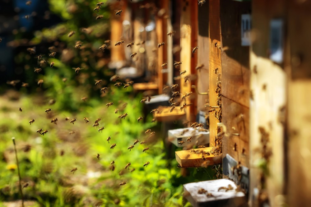 Hives,In,An,Apiary,With,Bees,Flying,To,The,Landing